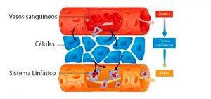 Para que sirve el drenaje linfatico post-liposuccion